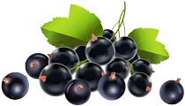 Pick your own Blackcurrants Cookham Iver