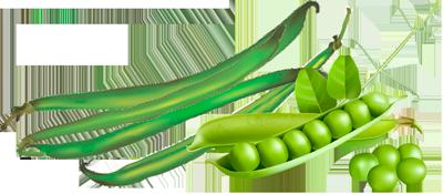Peas Beans and Runner Beans